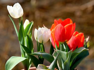Ziergarten und Nutzgarten im Monat April