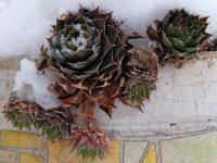 Ziergarten und Nutzgarten im Monat November