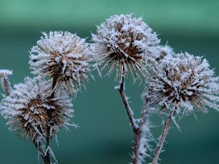 Phänologischer Winter