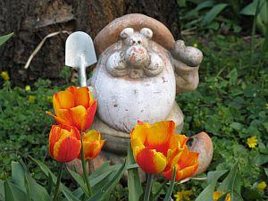Tulpenwächter