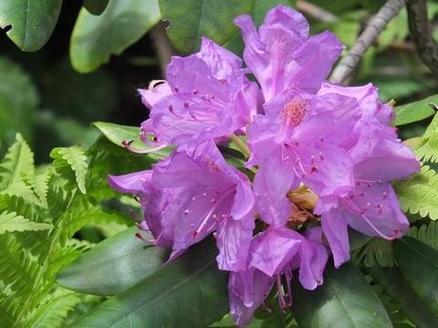 Idealer Standort der Pflanzen im Garten