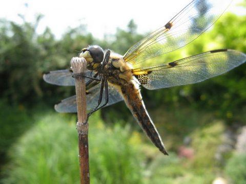 Tierbilder und Makrofotos aus dem Garten