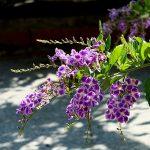 Einräumliste Kübelpflanzen