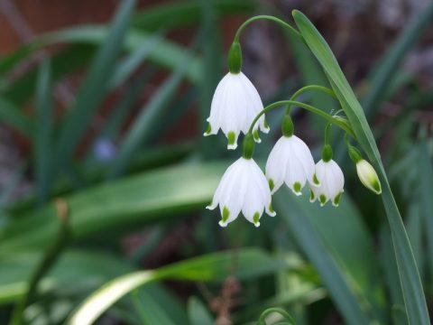 Fotos von Zwiebelblumen im Garten