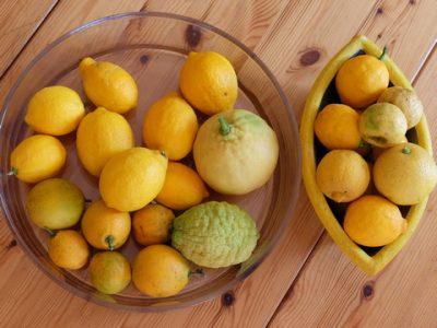 Rezepte mit Zitrusfrüchten