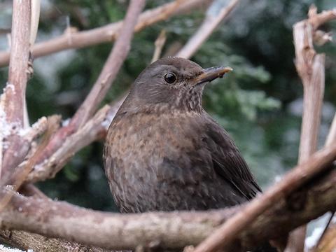 Winterfütterung von Wildvögeln im Garten