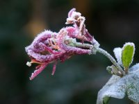 Erster Frosttag im Herbst