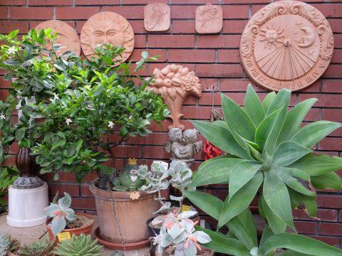Standorte für Kübelpflanzen im Sommer