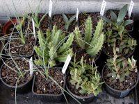 Bezugsquellen von Pflanzen und Samen