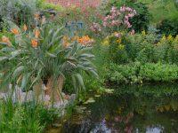 Unser Garten in Wels mit Kontaktdaten