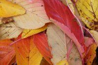 Ziergarten und Nutzgarten im Monat Oktober